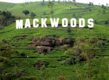 Mackwoods Tea Plantation Sri-Lanka