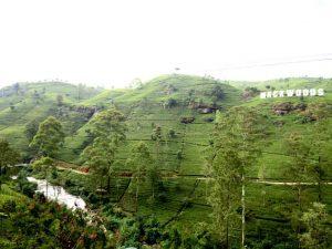 Mackwoods Tea Plantation Sri-Lanka