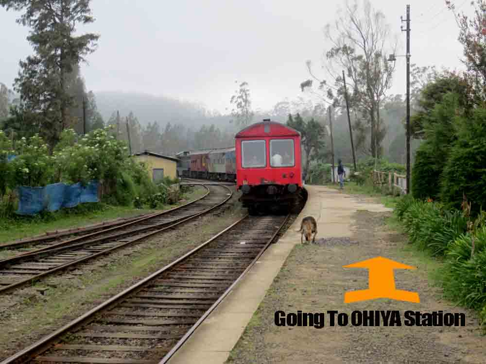 Pattipola_Station_Nuwara_Eliya2