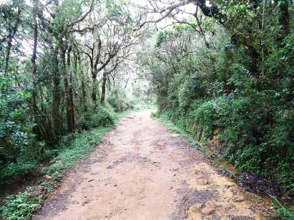 Mini_World's_End_Horton_Plain_Sri_Lanka8
