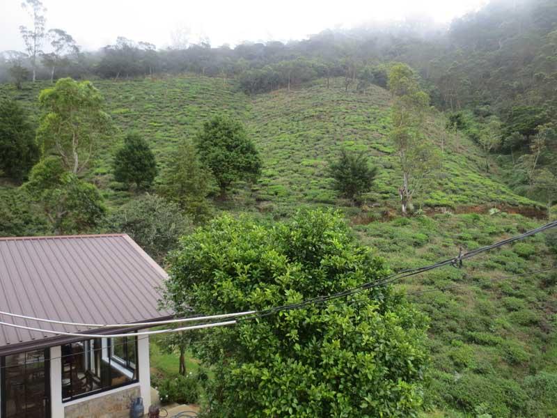 Hill Safari Eco Lodge, Ohiya Surrounding