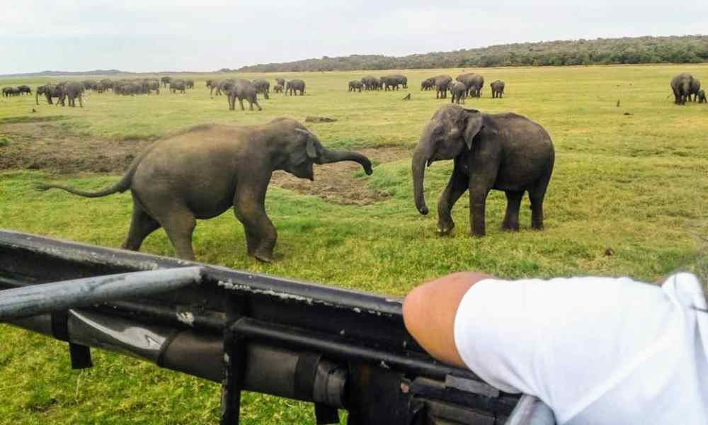 Elephant Safari in Minneriya National Park (1)