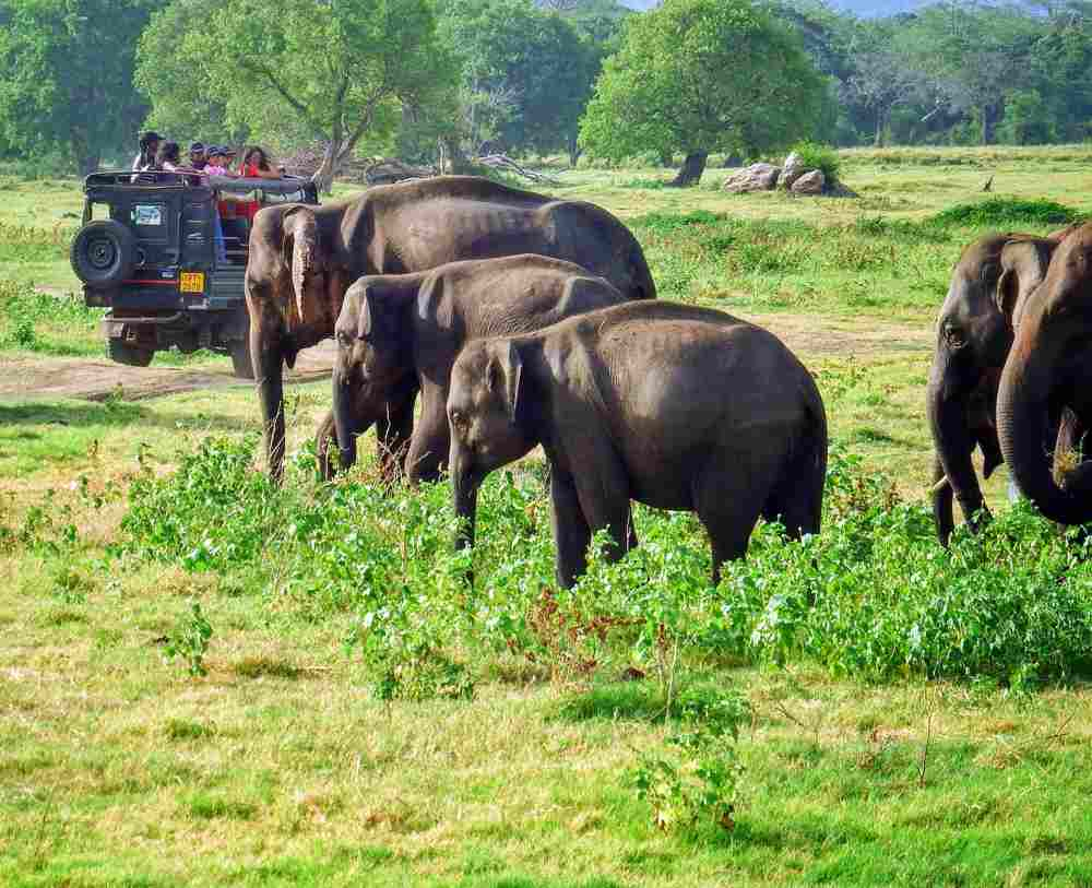 elephants Safari in National Park